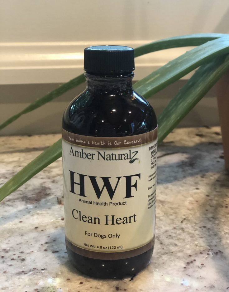 A natural heartworm treatment that works. I was shocked! This natural remedy is a safe & effectve alternative to the conventional treatment would have killed my senior rescue! I'm so glad I found it! #naturalheartwormtreatment #naturalremedy #heartworms #naturaltreatment #heartworm #pethealth #doghealth #gsdrescue #alternativetreatment #thehealthnutmama